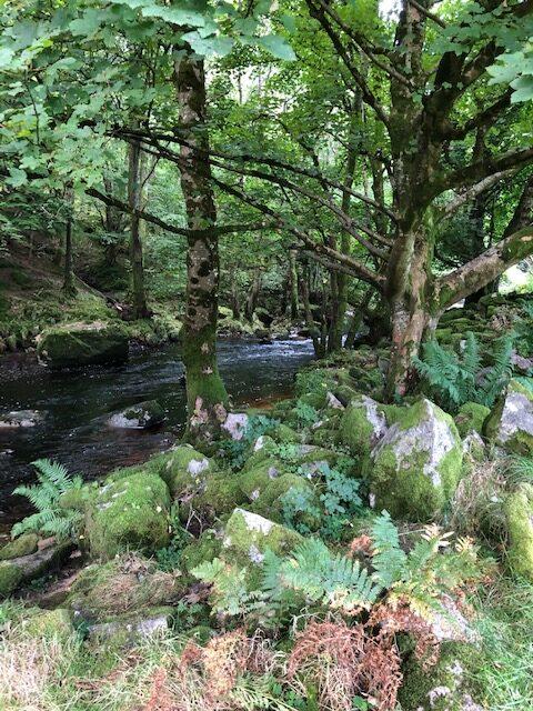 Wild Irish Walks Home Page